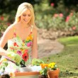 Pretty Blonde Female Gardening at Home — Stock Video