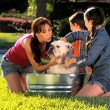Family Bulldog Grooming by Mom & Children - Stock Photo