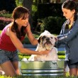Young Mother & Daughter Bathing Family Bulldog - Stock Photo