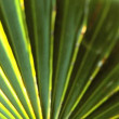 Extreme Close-up of Tropical Vegetation — Stock Video #23177568
