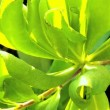 Tropical Leaves in Close-up — Stock Video