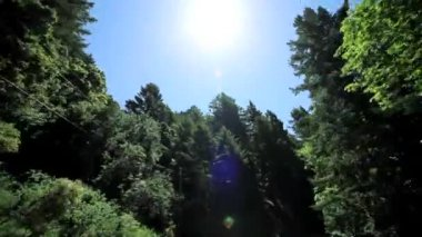 Point-of-View Driving Between Giant Redwood Trees — Stock Video
