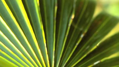 Extreme Close-up of Tropical Vegetation — Stock Video