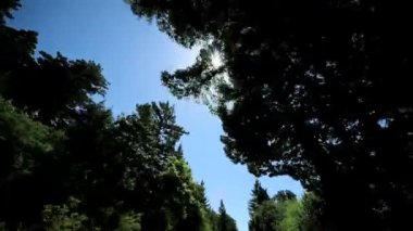 Point-of View Driving Past Giant Redwood Trees — Stock Video