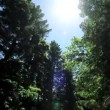Point-of-View Driving in Giant Redwood Tree Park — Stock Video