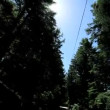 Stock Video: Point-of-View Driving Beside Giant Redwood Trees