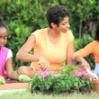 Little African American Girls Gardening with Mom — Stock Video #23246696