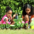 Stock Video: Little African American Girls Gardening