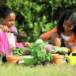Stock Video: Cute Young African American Girls Gardening