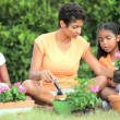 Stock Video: Ethnic Mother & Daughters Gardening Together