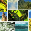 Montage of an Unpolluted Green Environment - Stock Photo