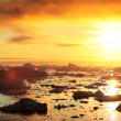 Stock Video: Golden Sunset over Melting Ice Floes