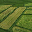Stock Video: Aerial View of Fertile Agricultural Land, Iceland