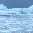 Time lapse Disko Bay Ice Floes, Greenland — Stok video