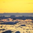 Pan of Golden Sunset over Melting Ice Floes — Stock Video
