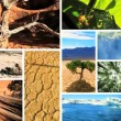 Montage Images of Green Vegetation & Barren Environments — Stock Video