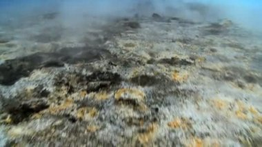 Barren Landscape of Hot Volcanic Springs — Stock Video