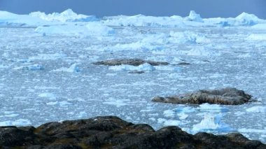 Ice Floes with Icebergs — Stock Video