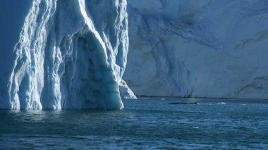 Pod of Arctic Humpack Whales — Stock Video