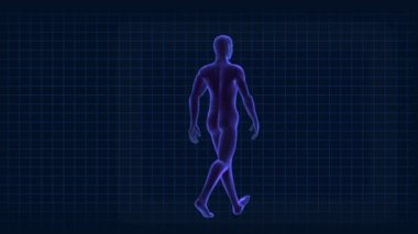 Medical 3D Graphic of a Virtual Walking Male — Stock Video