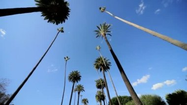 Point of View Driving Palm Trees — Stock Video