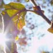 Stock Video: Morning Sun Park Fall Leaves