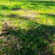 Stock Video: Inner City Park Grass and Leaves