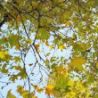Stock Video: Close up Leaves Fall Parkland