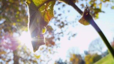 Fall Trees Leaves Inner City Park — Stock Video