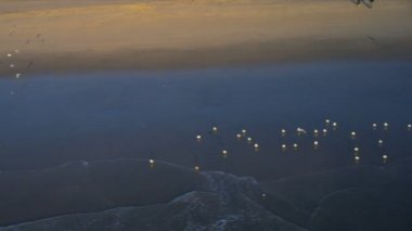 Aerial view of coastal seabirds, USA — Stock Video