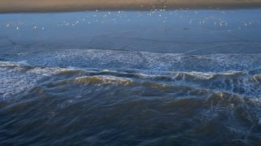 Aerial view of flying coastal seabirds, USA — Stock Video