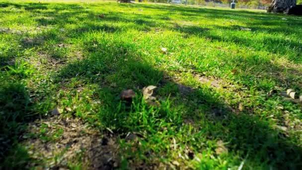 Sol de otoño Parque pasto — Vídeo de stock