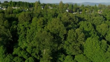 Aerial view of residential homes and suburbs, Seattle — Stock Video