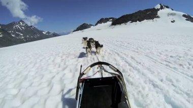 Husky dog team traversing — Stock Video