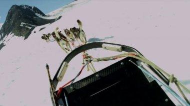 Husky dog sledge team — Stock Video