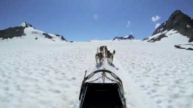 Alaskan dogsledding husky team — Stock Video