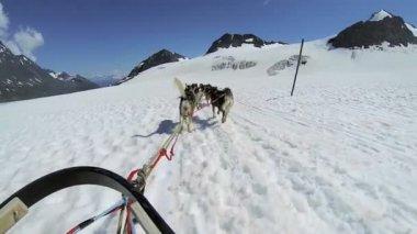 Husky dogsledding team — Stock Video