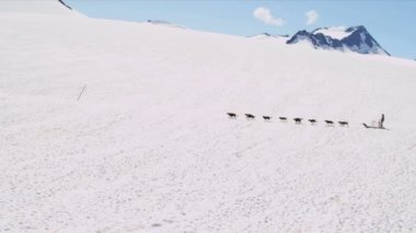Male driving husky dogsledding team — Stock Video