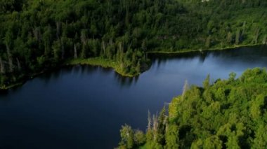 Remote spruce forest wilderness — Stock Video