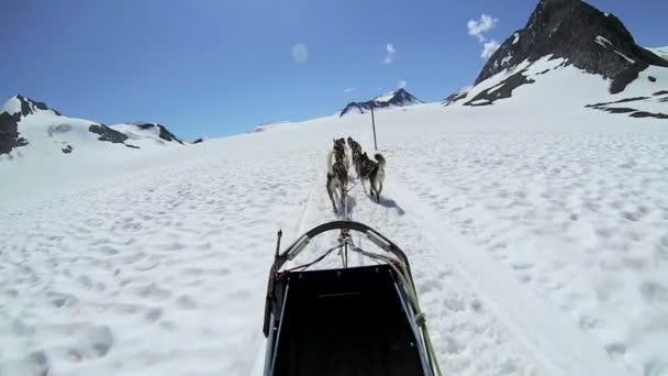 Trineos tirados por perros alaskan husky equipo — Vídeo de stock