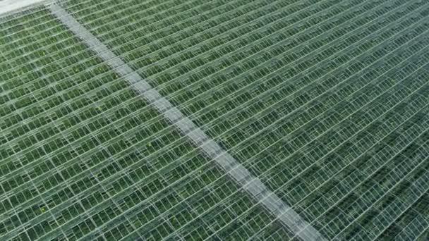Växthus Odla : Jordbruks industriella kommersiella växthus i vancouver