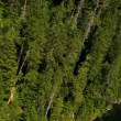 Aerial view of forest in the mountains — Stock Video #50369039