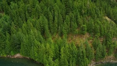 Aerial view forested mountainside mature trees, freshwater lake, Rockies — Stock Video