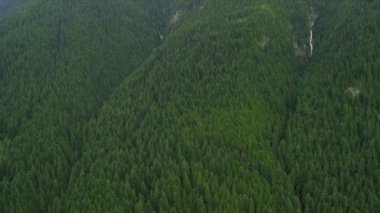 Aerial view of forest in the mountains — Stock Video