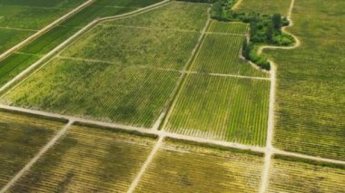 Aerial view wine producing vineyards Fraser Valley, Vancouver, Canada — Stock Video