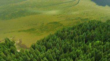 Aerial view water algae conifer evergreen trees Harrison River valley, Rockies, Canada — 图库视频影像