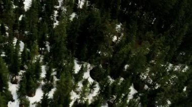 Aerial view of snowy forest — Vídeo de stock