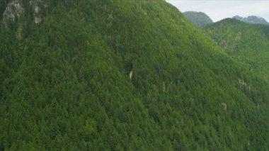 Aerial view of forest in the mountains — Stok video