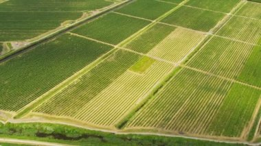 Aerial view wine producing vineyards — Vídeo de stock