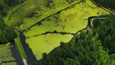 Aerial view water algae conifer evergreen trees Fraser River valley, Rockies, Canada — Stock Video